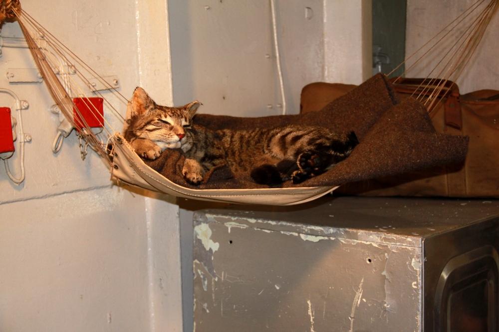 chat dans hamac